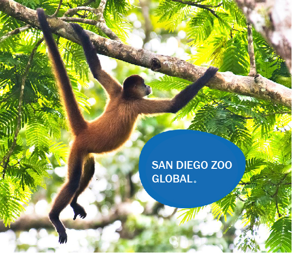 SD_Zoo_Header7